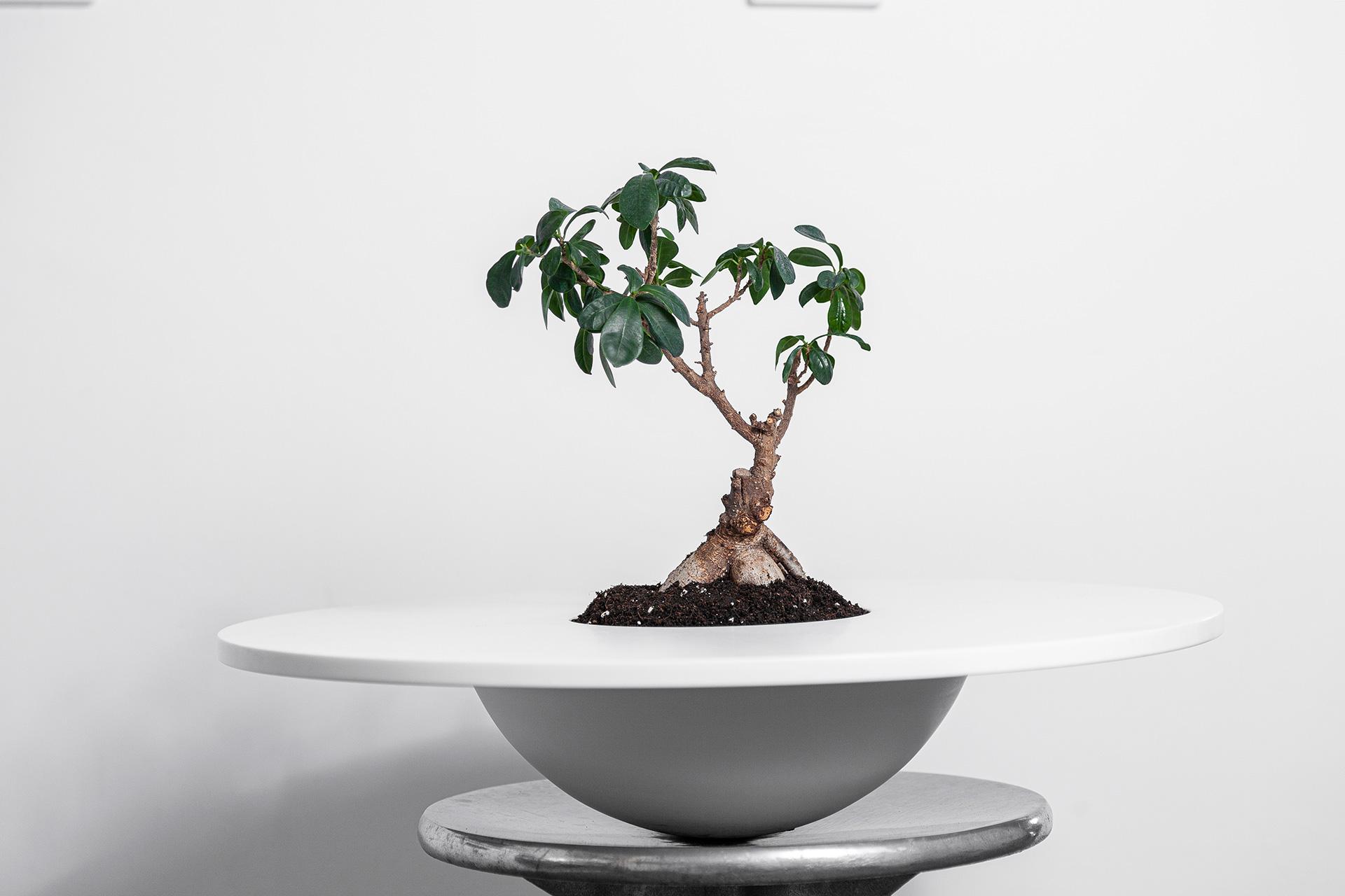 Hat Vase Tree - DESIGN BY MIGUEL SOEIRO